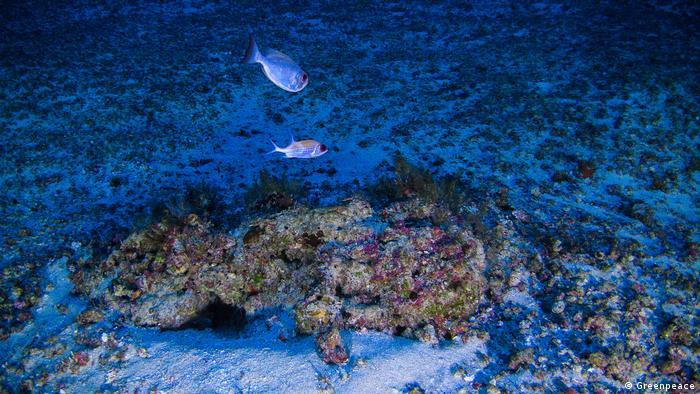 Corales de la Amazonía (Greenpeace)
