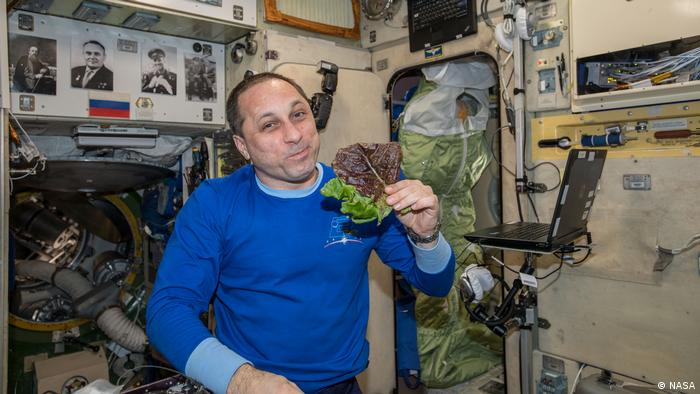 Kosmonaut Anton Shkaplerov in ISS eating red romaine lettuce harvested from an experiment