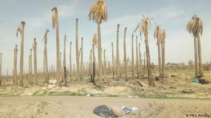 Palmen Katastrophe in Irak (DW:A. Malaika)