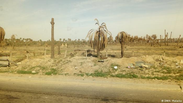 Palmen Katastrophe in Irak (DW/A. Malaika)