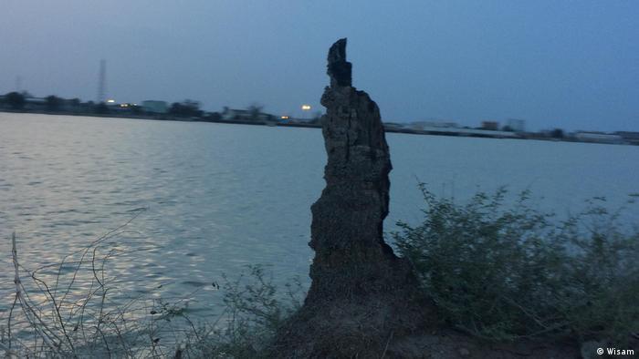 Palmen Katastrophe in Irak (Wisam)