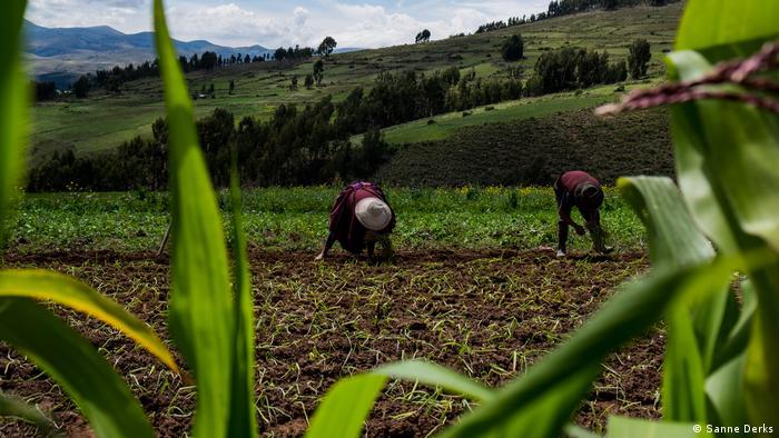 Global Ideas Landwirtschaft Bolivien (Sanne Derks)