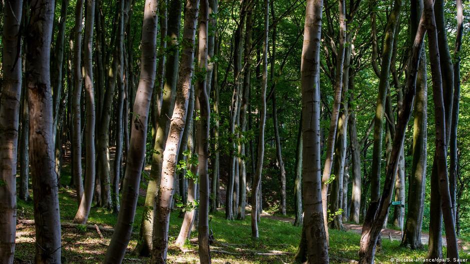 İklim değişikliğine karşı en etkili silah: Ormanlar