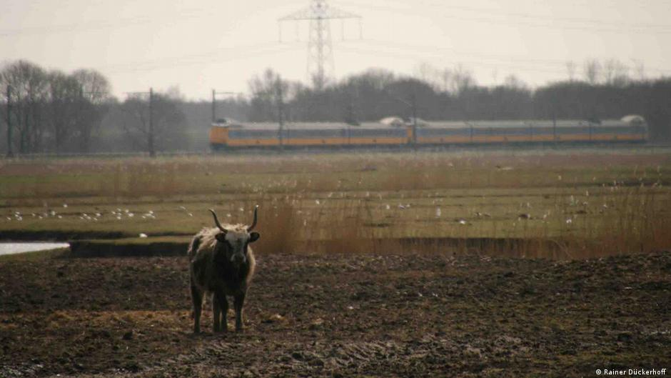 Dutch outrage as animals starve in fenced-in wilderness