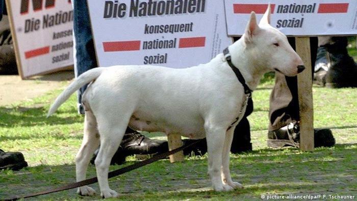 Deutschland 2000 NPD-Kundgebung in Essen - American Pitbull-Terrier