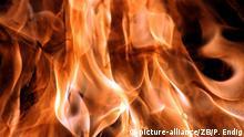 Flammen aus einem Holzfeuer