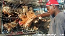 Südafrika Hühnerhaltung