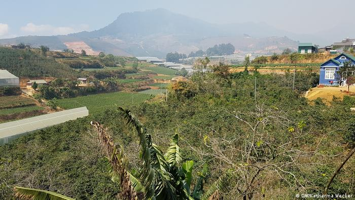 Photo: Coffee cultivation at the foot of Lang Biang mountain (Source: Katharina Wecker/DW)