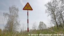 11 April 2016 +++ A radiation danger sign in the state radiation ecology reserve near the 30 km exclusion zone around the Chernobyl nuclear reactor, some 370 km from Minsk, Belarus, 11 April 2016. 30 years have passed since the accident and life has not returned to normal in the disaster-affected area. The levels of radiation remain high in the surroundings of the nuclear plant, though life does seem to be slowly recovering. There are very few people living in the villages near the Chernobyl nuclear site, and much of the land is gradually being turned into farmers fields. The flora and fauna is present and alive and a farm is operating 37 kms away from the reactor site. The farm is located near a radiation ecology reserve and has more than 260 horses and 55 cows being raised for sale there. Workers of the reserve claim that during all activities, the content of radionuclides is monitored. EPA/TATYANA ZENKOVICH PLEASE REFER TO ADVISORY NOTICE (epa05265084) FOR FULL PACKAGE TEXT +++(c) dpa - Bildfunk+++ |
