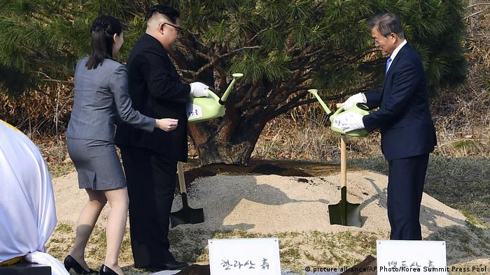 North Korean leader Kim Jong Un and South Korean President Moon Jae-in watering a tree near the military demarcation line separating the two countries
