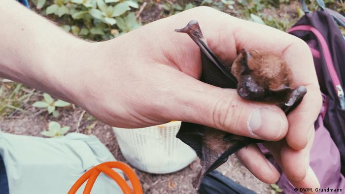 Kochs hand holding a bat - close up