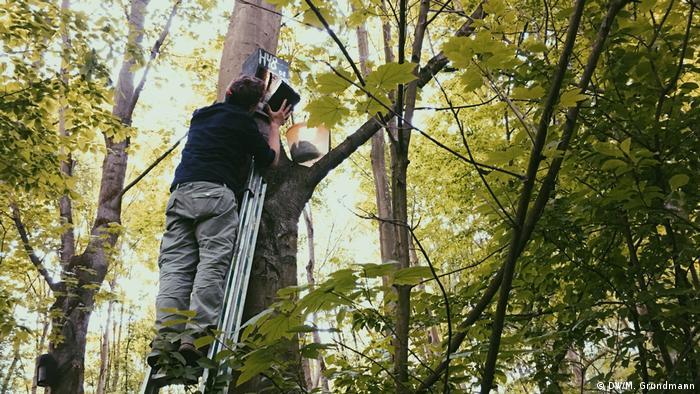 Trier University biologist Martin Koch checks a bat box at the mouth of the Sieg river