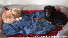 Regeln für Haustierhalter in Deutschland