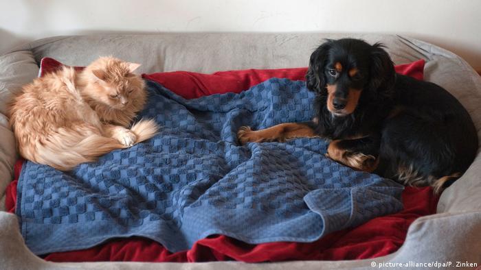 Кошка и собака в однйо корзине