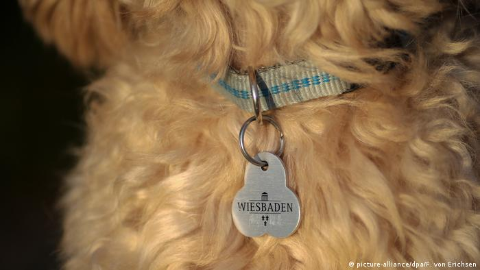 Регистрационный номер собаки