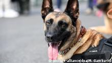 German military sniffer dog (picture-alliance/dpa/M. Gambarini)