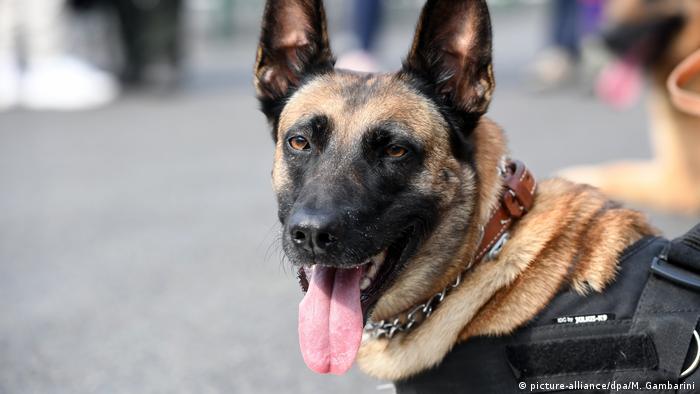German military sniffer dog