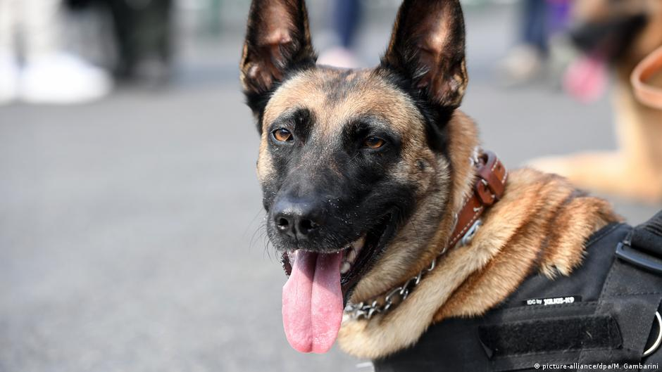 Coronavirus: German military training sniffer dogs