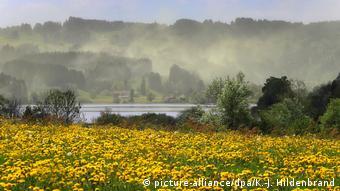 Ακόμη κι αν δεν υπάρχειέντονη γύρη στην ατμόσφαιρα, αλλεργιογόνοι παράγοντες εντοπίζονται ήδη κοντά σε φυτά