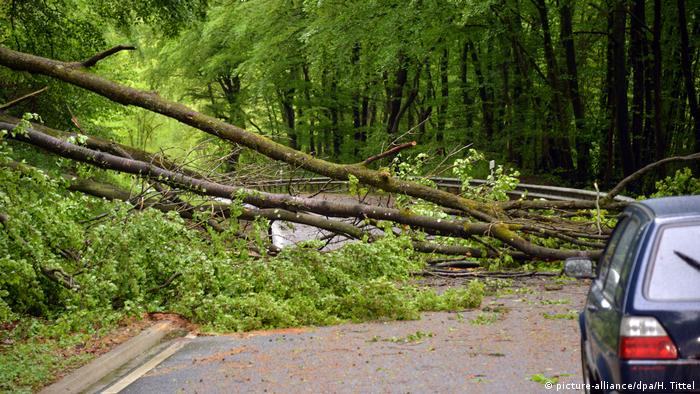 Trees on road near Trier (picture-alliance/dpa/H. Tittel)