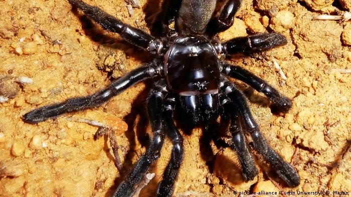 RIP Nummer 16: Älteste Spinne der Welt gestorben