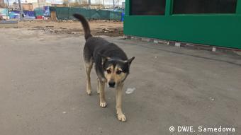 Οι δρόμοι των ρωσικών πόλεων όπου θα διεξαχθούν αγώνες του Μουντιάλ είναι άκρως επικίνδυνοι για τα αδέσποτα σκυλιά