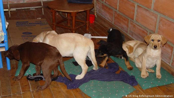 Puppies sit on the floor and sniff around