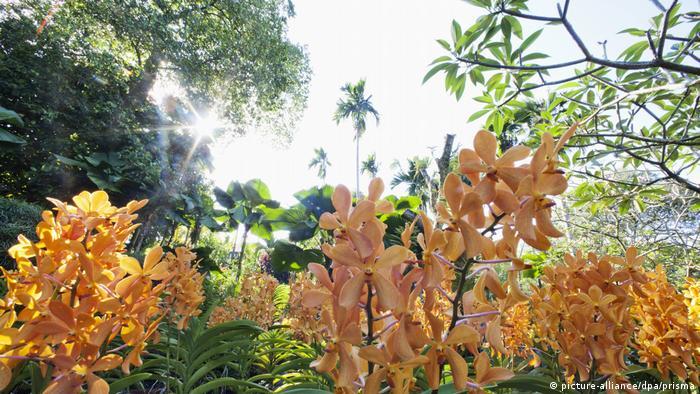 Singapore Botanic Gardens (picture-alliance/dpa/prisma)
