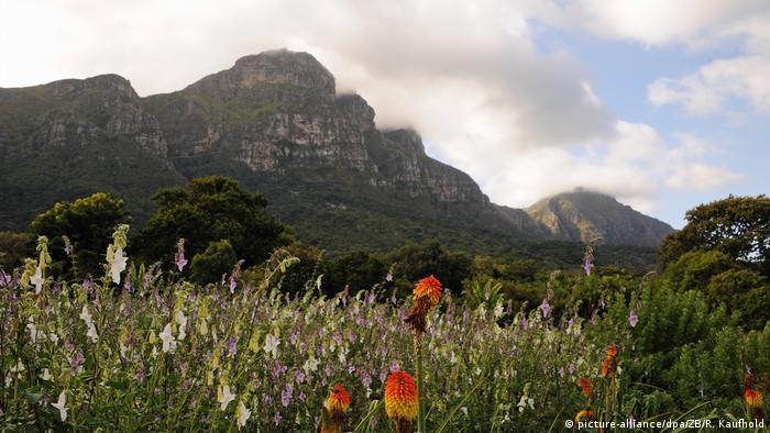Südafrika - Botanischer Garten von Kirstenbosch (picture-alliance/dpa/ZB/R. Kaufhold)