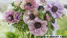 Blumensprache Zarter Anemonenstrauß