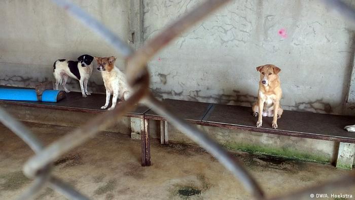Кучешките приюти в Русия са препълнени