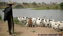 Nigeria Viehhirte