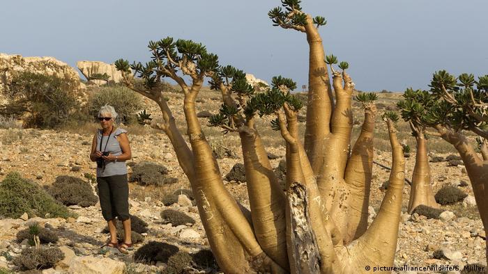 Jemen Insel Sokotra Wüstenrose (picture-alliance/Wildlife/S. Muller)