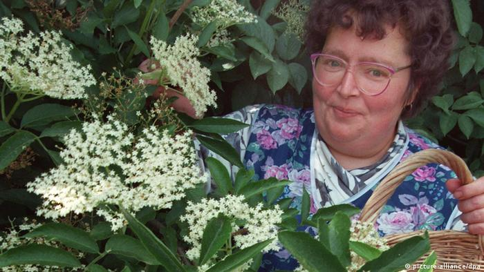 A woman collecting elderflowers (picture-alliance/dpa)