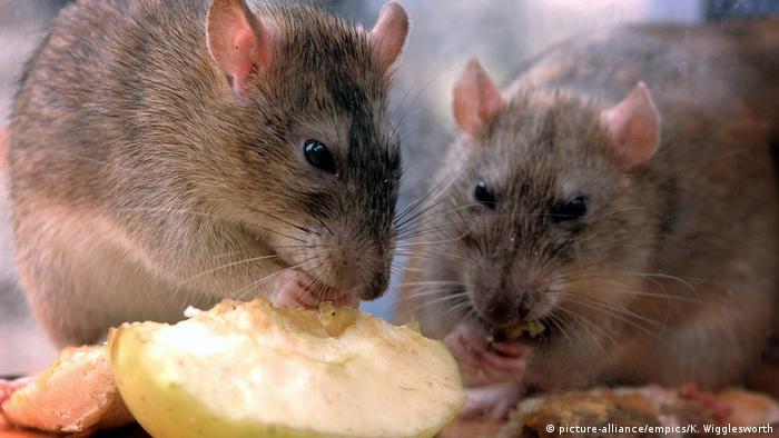 Масштабні крадіжки з держрезерву стали приводом для жартів - навіть радник голови МВС написав, що зерно з'їли миші