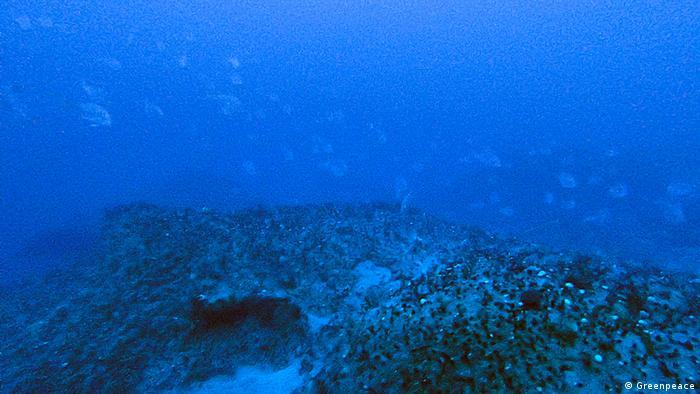 Os corais da Amazônia cobrem uma área de cerca de 56 mil quilômetros quadrados, maior que o estado do Rio de Janeiro