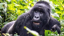 2015 Virunga Nationalpark im Kongo