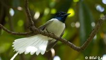 Pakistan Reportage Lebensbedingungen für Wandervögel