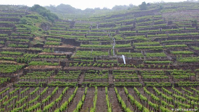 View of the vineyards of the Ahr Valley (DW/Chase Winter)