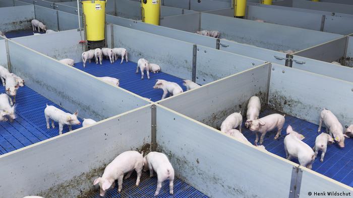 Schweine in Parzellen. Aus der Fotoserie Food (Henk Wildschut)