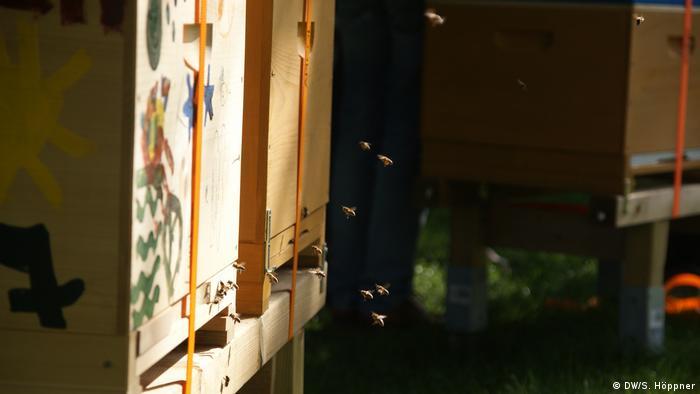 Das Bild zeigt Bienen vor dem Bienenstock des Kölner Nachbarschaftsprojekt des Wohnungsanbieters GAG und der Honigconnection