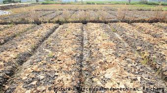 China Landwirtschaft Dürre