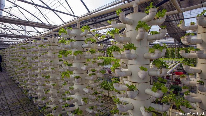 DW eco@africa - a hydroponic farm (Imago/View Stock)