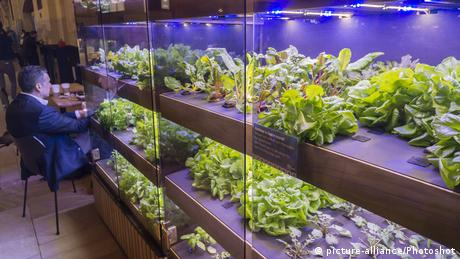 DW eco@africa - red and blue led lights provide light for photosynthesis to grow an assortment of greens in a farm for the Great Northern Food Hall in Grand Central Terminal in New York (picture-alliance/Photoshot)