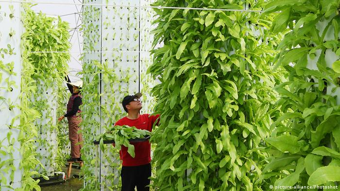 DW eco@africa - hydroponic farm in China (picture-alliance/Photoshot)