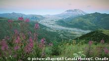 DW eco@africa - Mount St. Helen's in the USA (picture-alliance/All Canada Photos/C. Cheadle)