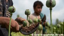 Afghanistan Drogen Opium Gesellschaft (Getty Images/AFP/N. Shirzada)