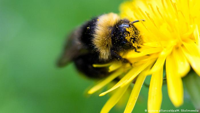 With bees on the brink, World Bee Day seeks to raise awareness