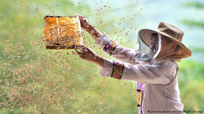A Chinese beekeeper handles bees