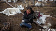 Tsetse, six-year-old daughter of Dukha herder Erdenebat Chuluu, sits among her family's reindeer in a forest near the village of Tsagaannuur, Khovsgol aimag, Mongolia, April 21, 2018. REUTERS/Thomas Peter SEARCH REINDEER HERDERS FOR THIS STORY. SEARCH WIDER IMAGE FOR ALL STORIES. TPX IMAGES OF THE DAY